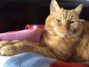毛布の上で佇む猫