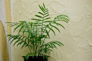部屋用の観葉植物
