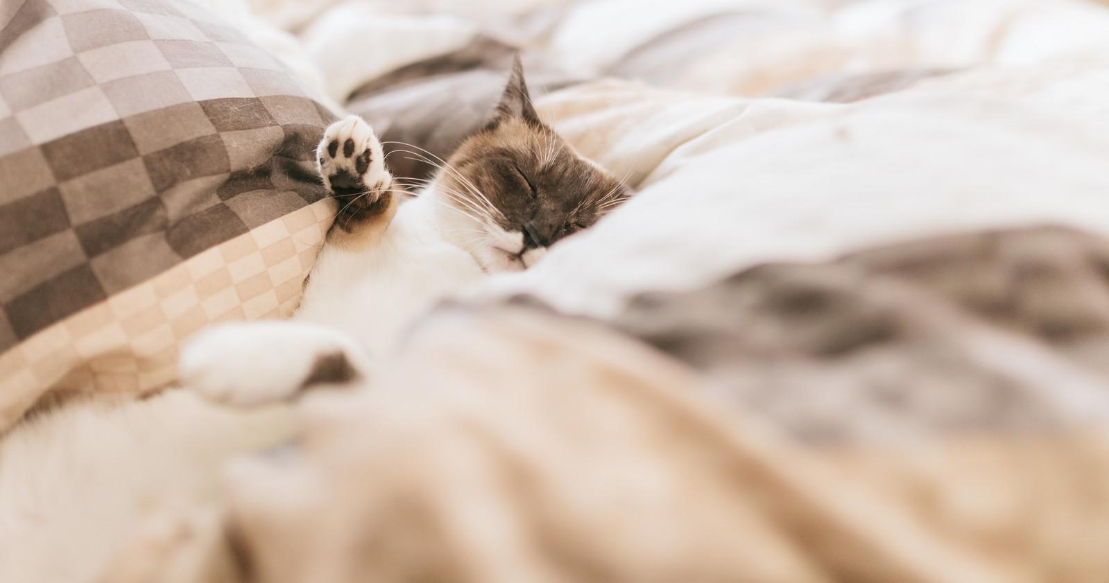 布団の上で遊ぶネコ