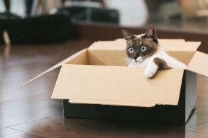 Amazonの段ボールに入った猫